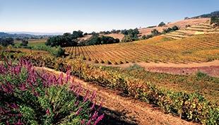 Alexander Valley and Dry Creek Valley Bike Tour